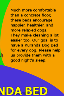 Our Dogs Deserve a soft, dry bed. Donate a Kuranda Bed.