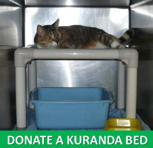 Donate Kuranda Cat Beds for TLC Kitties!