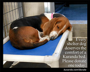 Kuranda Doggie Beds - indestructible